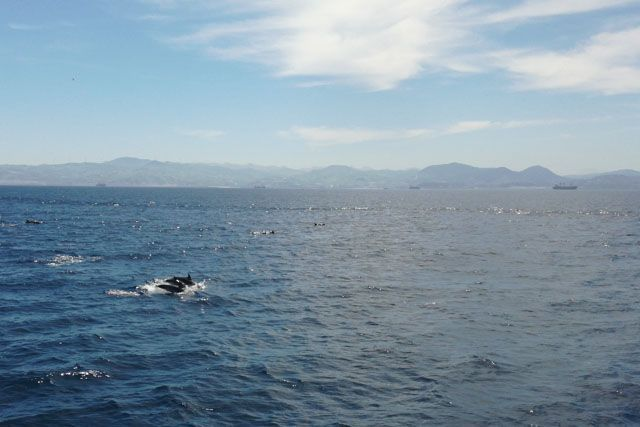 Los delfines son muy simpáticos y se dejan ver con mucho salero