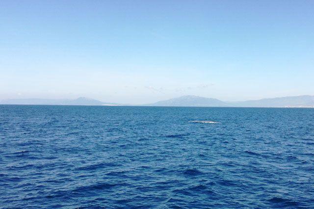 El avistamiento de cetáceos es una de las actividades más maravillosas que puedes hacer en Tarifa para disfrutar de los animales en libertad.