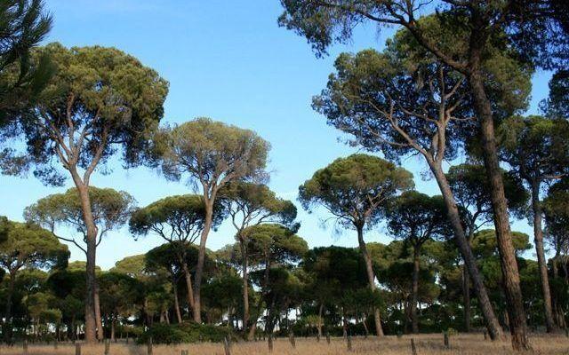 Entorno de Doñana
