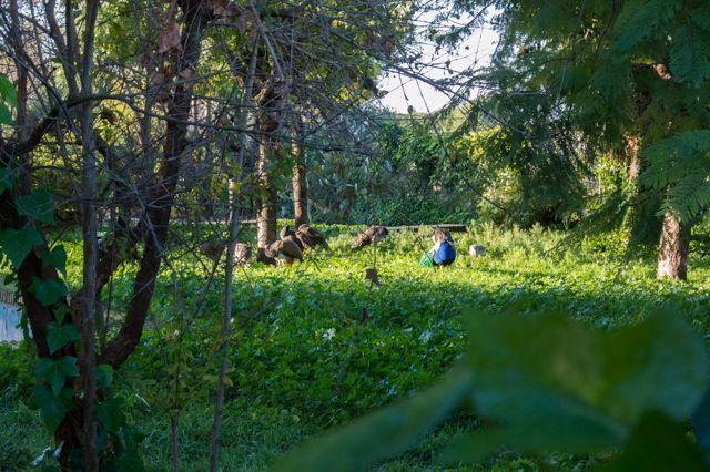Parque-La-Toya-Trebujena-002