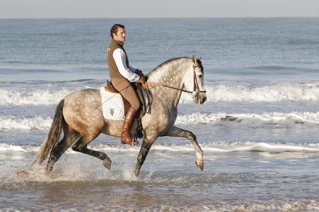 royal-center-hipica-chiclana-caballos-cadiz-5